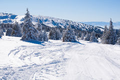 Vibrant panorama of the slopes at ski resort, snow trees, blue sky. Vibrant panorama of the slope at ski resort, snow pine trees, blue sky Stock Photos