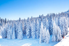 Vibrant panorama of the slopes at ski resort, snow trees, blue sky. Vibrant panorama of the slope at ski resort, snow pine trees, blue sky Stock Images