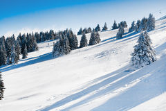 Vibrant panorama of the slopes at ski resort, snow trees, blue sky. Vibrant panorama of the slope at ski resort, snow pine trees, ski lift, blue sky Stock Photo