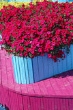 Vibrant Petunias Stock Photos