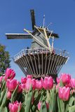 Vibrant pink tulips and Dutch windmill royalty free stock photos