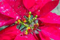 Vibrant Plant Stock Photo