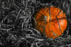 A Vibrant pumpkin in black-and-white grass. Stock Image