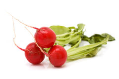 Vibrant Radish Group Royalty Free Stock Photo