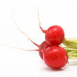 Vibrant Radish Group Stock Photography