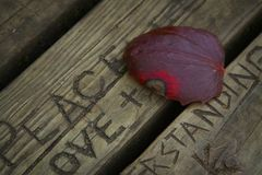Lonely red leaf royalty free stock photography