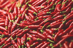 Vibrant Red Pepper Royalty Free Stock Photography