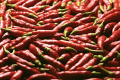 Vibrant Red Pepper Stock Photography