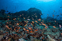 Vibrant Reef Fish Stock Photos