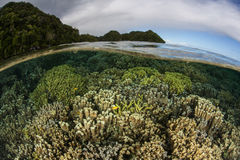 Vibrant Reef in Tropical Lagoon. A healthy coral reef thrives in Palau's lagoon. Palau is a Micronesian island group known for its high marine biodiversity and Royalty Free Stock Images