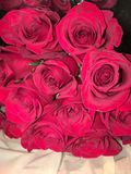 Vibrant roses royalty free stock image
