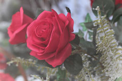 Vibrant roses. Vibrant red cloth roses with lush green ferns Royalty Free Stock Photos