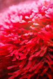 Vibrant Sea Plant Stock Photos