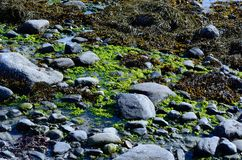 Vibrant seaweed Stock Images