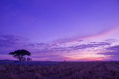 Vibrant sky on the meadow. Royalty Free Stock Photo