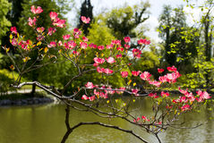 Vibrant Spring blooming Royalty Free Stock Photo