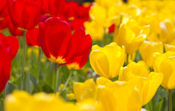 Vibrant Spring Flowers Royalty Free Stock Photography