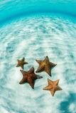 Vibrant Starfish on Shallow, Caribbean Sand Flat royalty free stock image