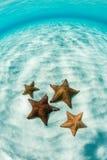 Vibrant Starfish on Shallow, Caribbean Sand Flat royalty free stock image