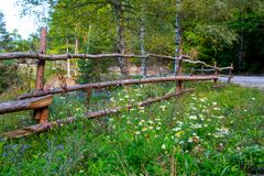 Vibrant summer background  with wooden fence and camomiles Royalty Free Stock Images