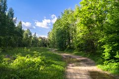 Vibrant summer landscape. Deserted country road through the mixed forest on the sunny day. Woodland of Moscow region is a great place for communication with royalty free stock photography