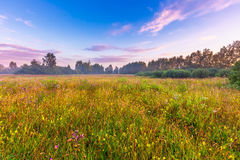 Vibrant summer sunrise over foggy, magical meadow Stock Image