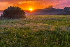 Vibrant summer sunrise over foggy, magical meadow Stock Photo
