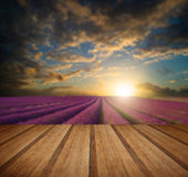 Vibrant Summer sunset over lavender field landscape with wooden Stock Image