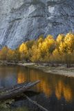 Vibrant sunlit golden trees reflected in water at Half Dome, Yosemite stock photo