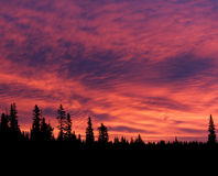 Vibrant Sunrise with Forest Silhouettes Stock Image