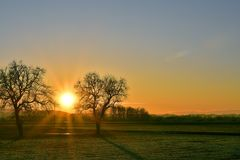 Vibrant sunset over the meadow. Beautiful sunset over the meadow. The sun is exactly between two trees Royalty Free Stock Photos