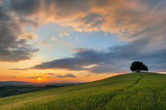 Vibrant sunset over Tuscany. Vibrant colors of a sunset over a lone tree on a hill in Tuscany Royalty Free Stock Images