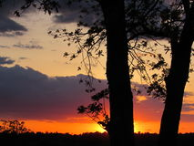 Vibrant Sunset with Tree Silhouette Foreground royalty free stock image