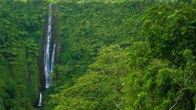 Vibrant and tall Papapapaitai falls on Upolu island, Samoa stock video