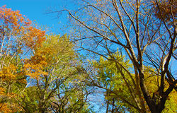 Vibrant Tree Colors During Fall Royalty Free Stock Photo