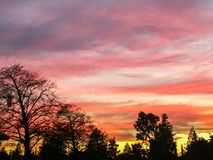 Vibrant Tree Silhouette Sunset Sky. Royalty Free Stock Images
