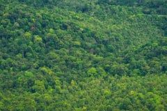 Vibrant trees Royalty Free Stock Photos