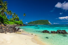 Vibrant tropical Lalomanu beach on Samoa Island with coconut pal Royalty Free Stock Photo