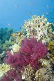 Vibrant tropical reef scene. Stock Images