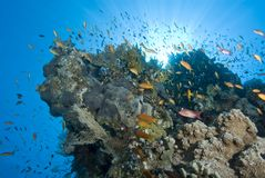 A vibrant tropical reef scene with sunrays. Royalty Free Stock Photography