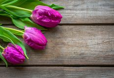 Vibrant Tulips against a rustic wooden background royalty free stock images