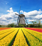 Vibrant tulips field with Dutch windmill. Netherlands. Beautiful cloudy sky Stock Photography