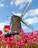 Vibrant tulips field with Dutch windmill. Netherlands. Beautiful cloudy sky Stock Images