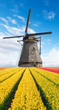 Vibrant tulips field with Dutch windmill. Netherlands. Beautiful cloudy sky Royalty Free Stock Photo
