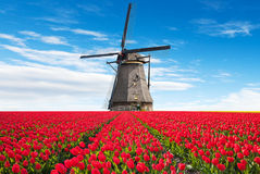 Vibrant tulips field with Dutch windmill. Netherlands. Beautiful cloudy sky Royalty Free Stock Photos