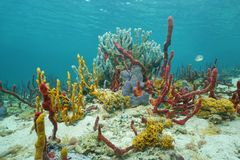 Vibrant underwater life with sea sponges on seabed Stock Images