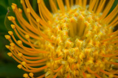 Vibrant Unique Flower. A macro shot of a pretty orange and yellow flower royalty free stock images