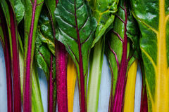 Vibrant vegetable, swiss rainbow chard Royalty Free Stock Photo