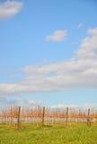 Vibrant Vineyard Royalty Free Stock Photo