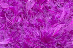 Violet feather boa background Royalty Free Stock Photos